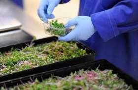 उत्तराखंड: कृषि वैज्ञानिकों के सैकड़ों पद रिक्त, कैसे होगी रिसर्च?