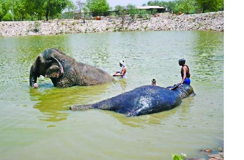 हाथी खरीदना आसान, पालना मुश्किल