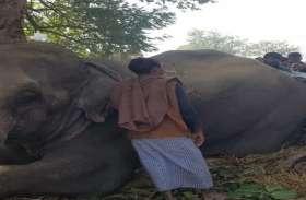दस्यु ददुआ के पुत्र पूर्व विधायक का हांथी हुआ बेकाबू इलाके में हड़कम्प काबू करने में जुटा वन विभाग