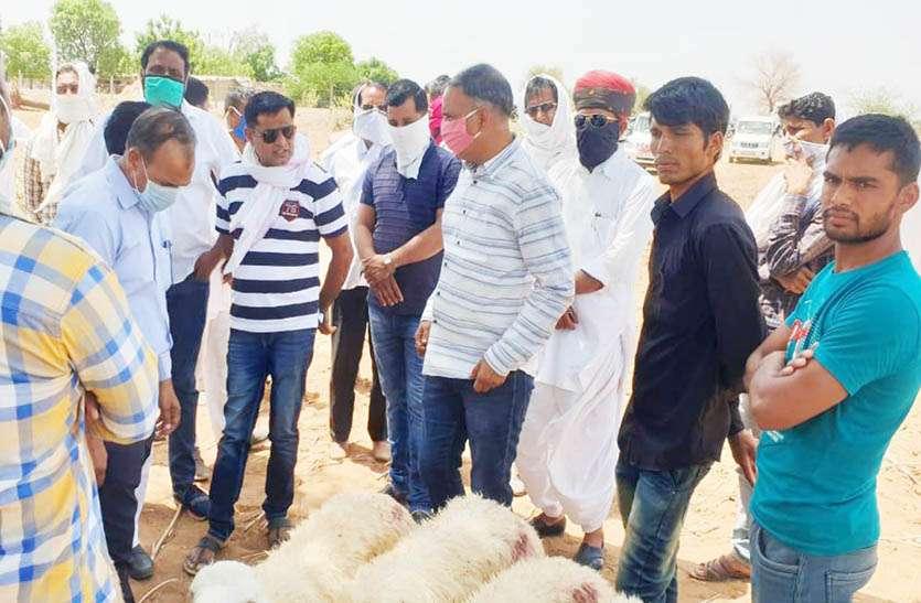 मालपुरा के अरनिया बस्सी गांव में अज्ञात बीमारी से 15 भेड़ों की हुई मौत