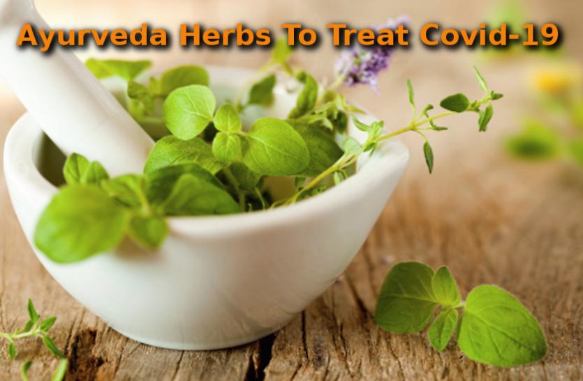 Coronavirus Update: आयुर्वेद में सदियों से हाेता रहा है इन औषधियों का उपयोग, अब करेंगी कोरोना का सफाया