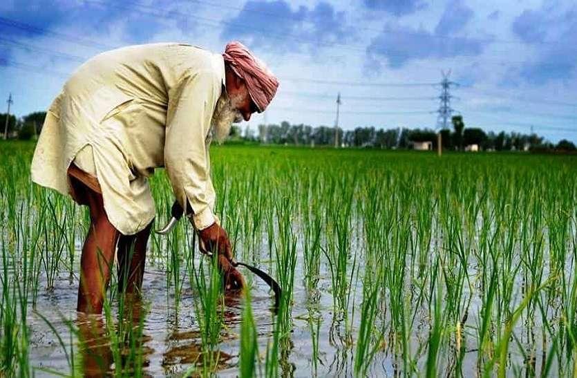 पंजाब के चावल की विदेशों में मांग, मजदूरों के पलायन से धान की खेती पर संकट