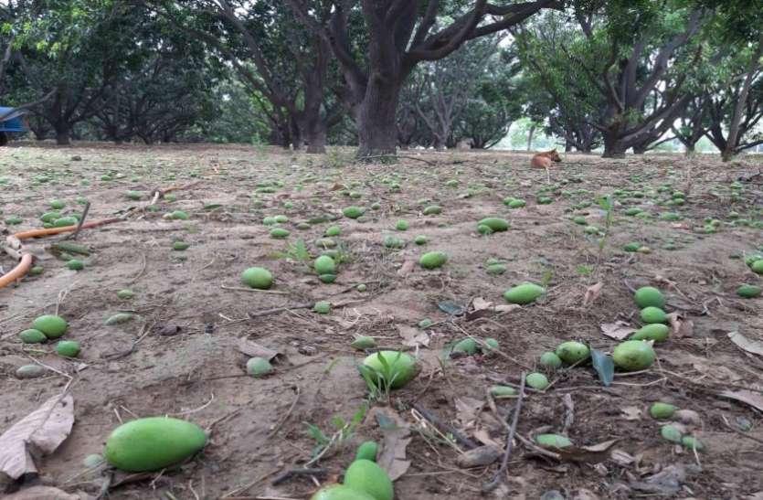 इस जिले में कहर बनकर आया तूफान, बिजली के खंभे टूटे, किसानों की बढ़ गई मुश्किलें