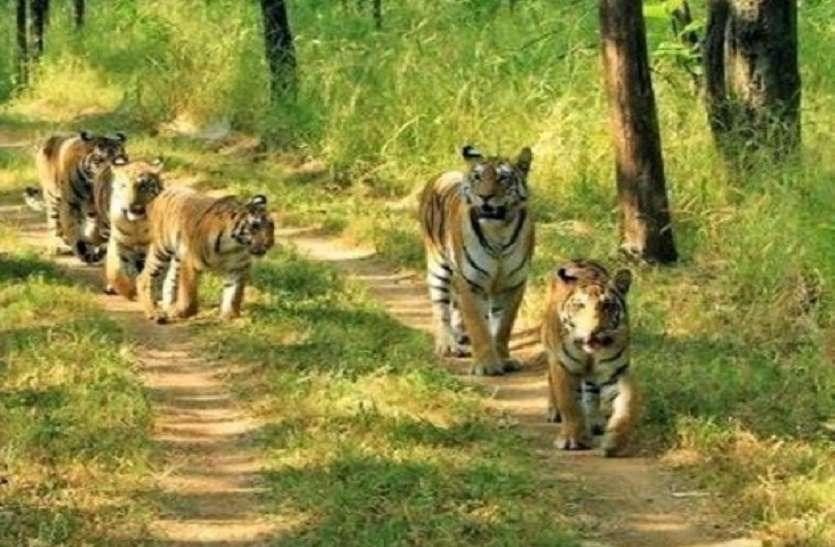 देश के तीनों टाइगर रिजर्व में शिकारियों को लेकर जारी किया गया अलर्ट