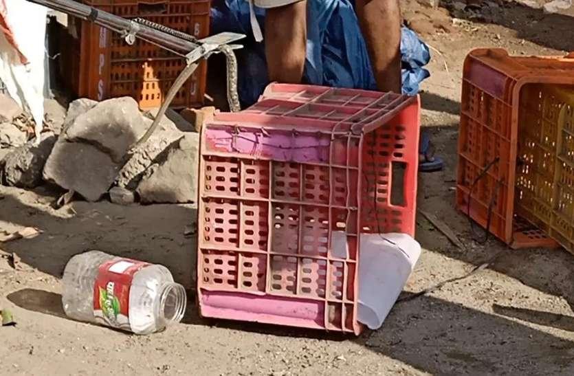 Total लॉकडाउन के बाद फल दुकान खोलते ही ट्रे में सांप पर पड़ी नजर तो उड़ गए होश, जान बचाने खुद कर रहा था मशक्कत