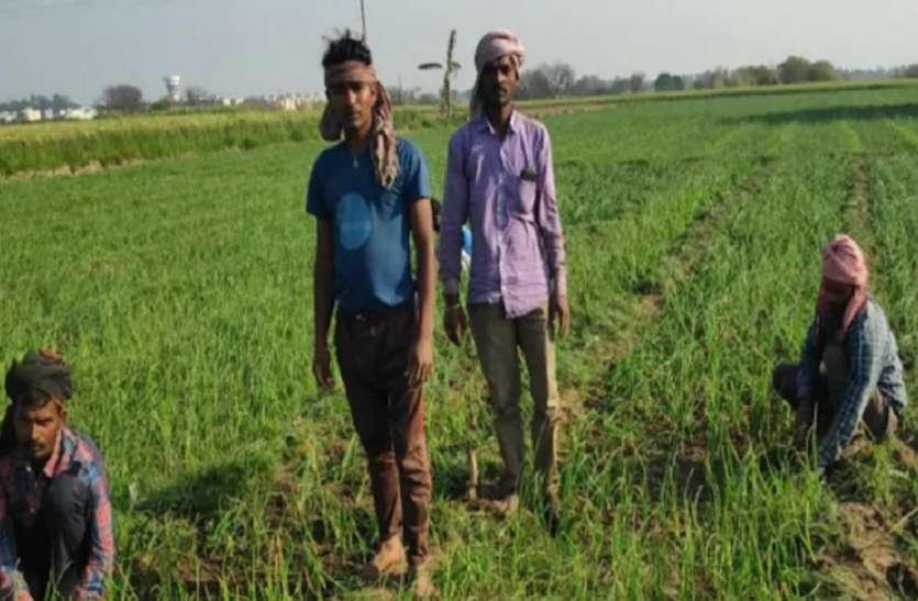 कृषि की ओर लौटेंगे ग्रामीण युवा