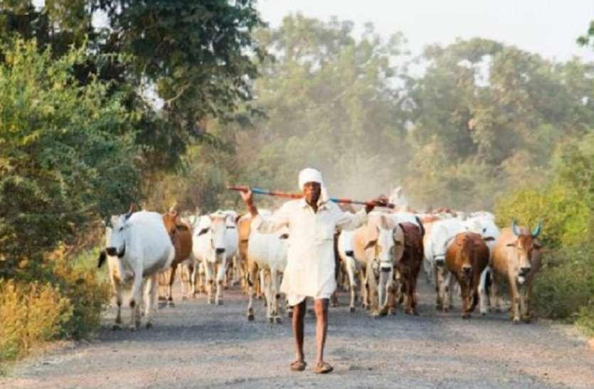 Economic Package : पशुपालन विकास पर मोदी सरकार मेहरबान, 28,343 करोड़ का ऐलान