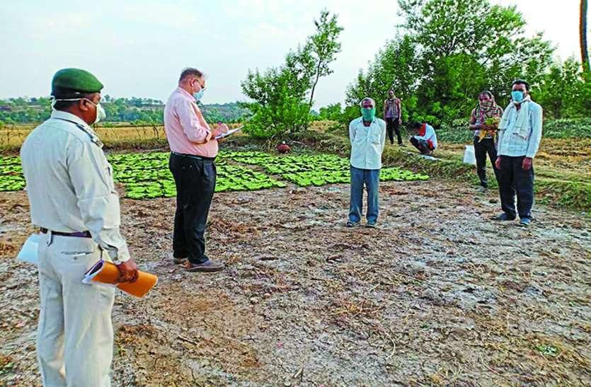 जंगल से महुआ के विदा होते ही तेंदुपत्ता और अचार में दिखी रोजी-रोटी