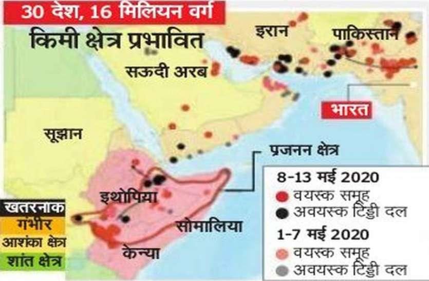 5 दिन में आधे राजस्थान तक पहुंच गई टिड्डी, पेस्टीसाइड स्प्रे के बावजूद नहीं हो रही खत्म