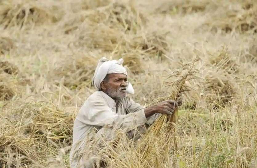 Rajasthan Farmer : ओलावृष्टि प्रभावित काश्तकारों को 55.38 करोड़ रुपए