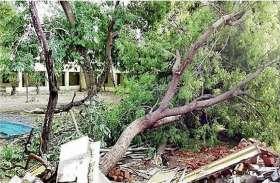 पेड़ गिरने से 15 मवेशियों की मौत, 7 घायल