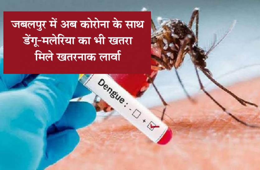 MP news in hindi: जबलपुर में अब कोरोना के साथ डेंगू-मलेरिया का भी खतरा, मिले खतरनाक लार्वा