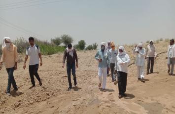 पाकिस्तान से आई टिडि्डयों की फौज का चूरू के खेतों पर हमला