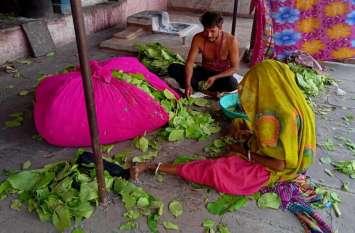 गरीब तबके के लिए रोजगार का माध्यम बना तेंदूपत्ता तुड़ाई कार्य