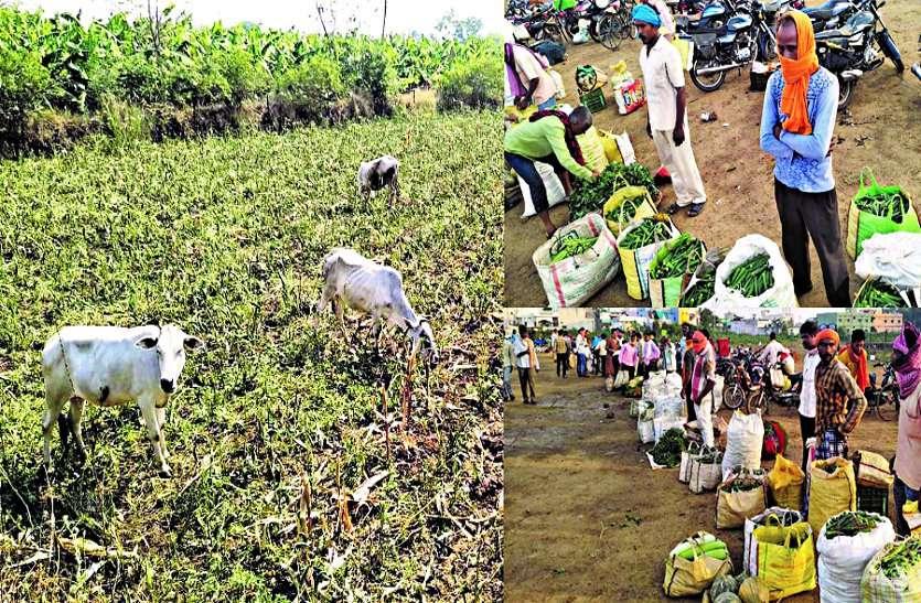किसानों पर लॉकडाउन और मौसम की दोहरी मार, अब सरकार से राहत का इंतजार