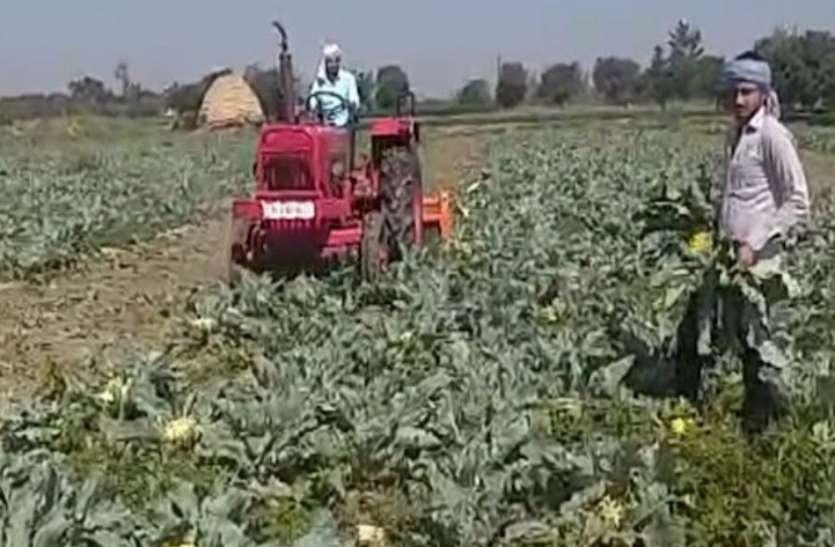 Corona: लॉकडाउन में नहीं बिकी सब्जी ताे खड़ी फसल पर ट्रैक्टर चलाने काे मजबूर हुआ किसान