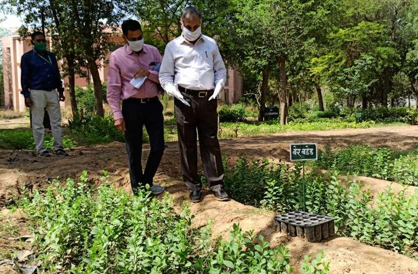 एसकेआरएयूः एक लाख पौधे एवं डेढ़ हजार क्विंटल वर्मीकम्पोस्ट तैयार