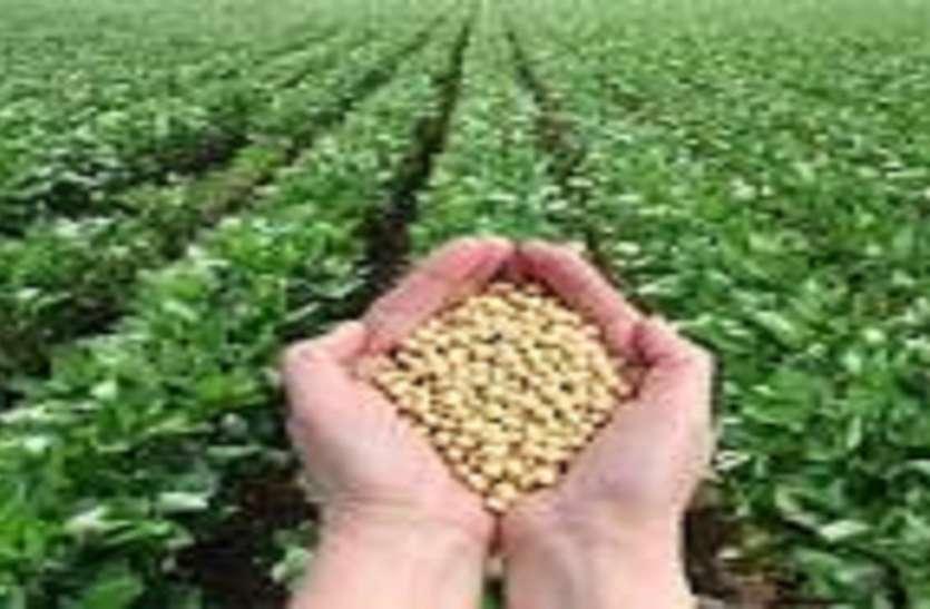 राजस्थान के किसानों के खेतों में खुशहाली लाएगी सोयाबीन