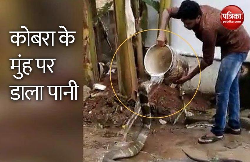 एक शख्स ने किंग कोबरा को नहलाया, वीडियो देखकर हैरान हुए लोग..देखें Viral Video