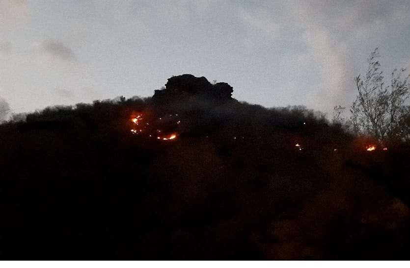 जंगल में ऐसी फैली आग कि रात तक नहीं हो पाया काबू