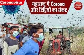 Corona के बाद टिड्डियों की गिरफ्त में महाराष्ट्र, मथुरा और दिल्ली में भी अलर्ट