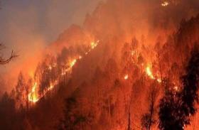 Fact Check: उत्तराखंड में जंगल जलने से हैं दुखी तो पढ़ें यह खबर, पता चलेगा सच