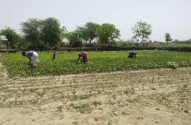 उद्यानिकी फसलों के प्रति बढ़ा किसानों का रुझान, हर साल बढ़ रहा रकबा