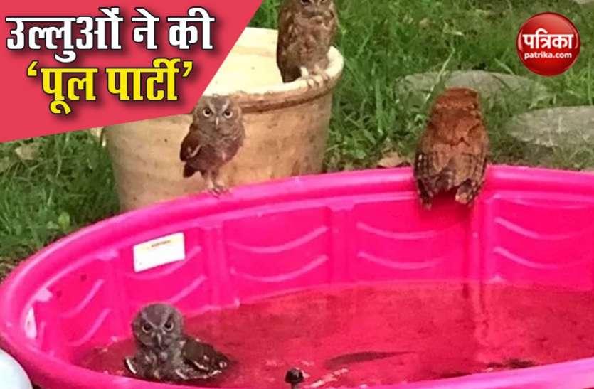 उल्लुओं ने 'पूल पार्टी' में जमकर की मौज, Social Media पर Viral हुई फोटो