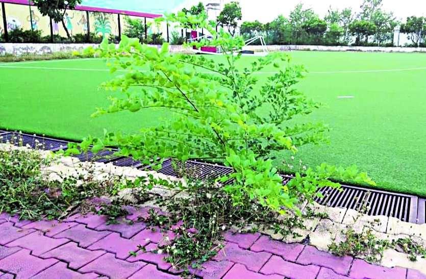 नियमित सफाई और पर्याप्त पानी नहीं मिलने की वजह से मैदान पर उग आई हैं झाड़ियां ...