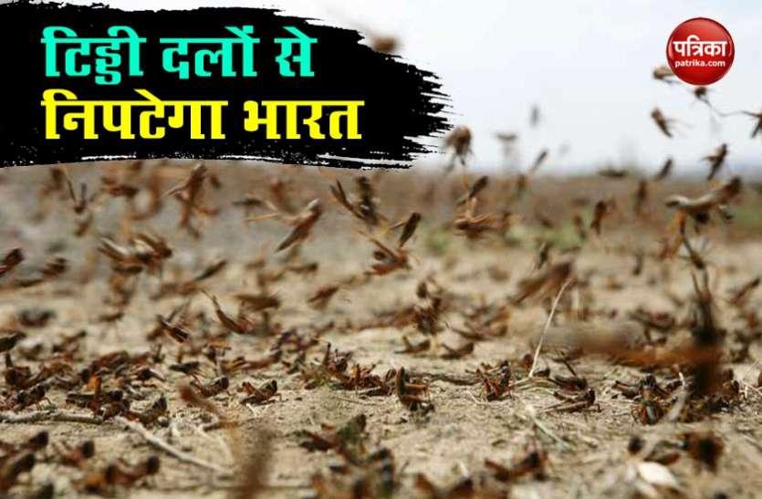 Locust Attack: टिड्डी दलों से सीमा के बाहर ही निपटेगा भारत, जानें क्या है सरकार का प्लान?