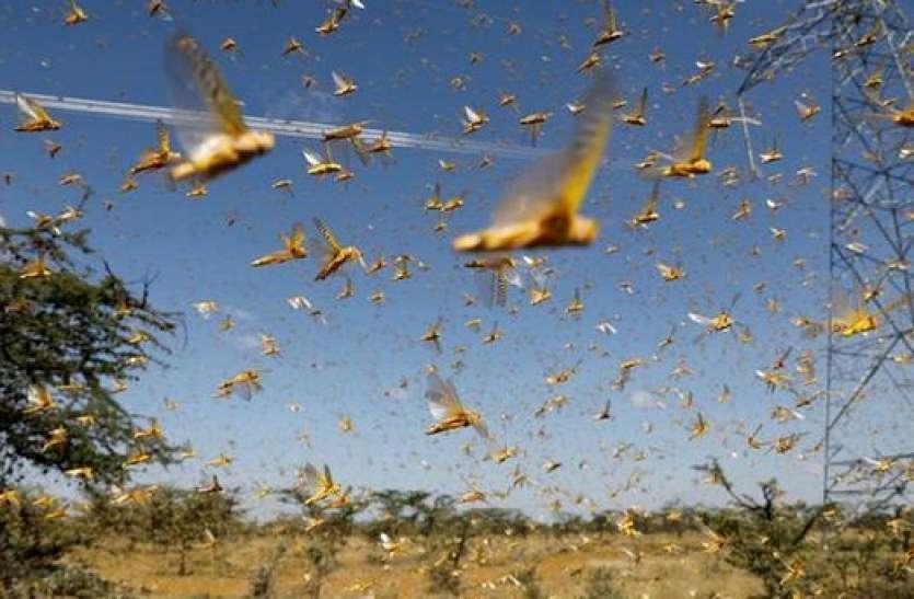 सावधान! यूपी के इस जिले में हो सकता है टिड्डियों का हमला, डीएम ने कहा— पटाखे फोड़ो