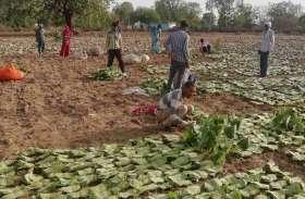 लक्ष्य के करीब हुआ तेंदूपत्ता का संग्रहण,लॉकडाउन के बीच शुरू हुई थी खरीदी