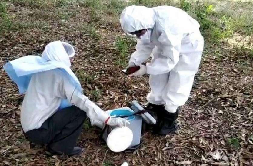 कोरोना संक्रमण के दौर में एमपी के इस जिले में चमगादड़ों की शामत, हजारों ने गंवाई जान