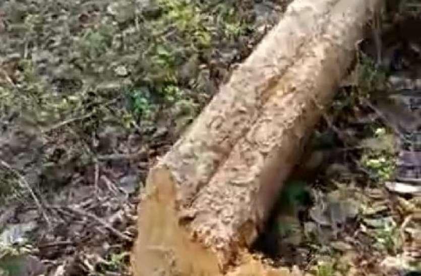 लॉकडाउन में वन विभाग का सूचना तंत्र फेल,माफिया काट रहे जंगल