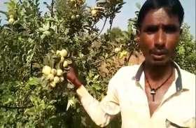 हिमाचल का 'सेब बाग' तैयार कर भीलवाड़ा के किसान ने किया चौंकाने वाला काम