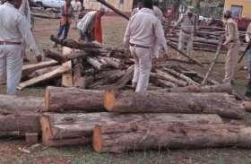 अवैध कारोबारियों पर फारेस्ट विभाग की कार्रवाई जारी, एक लाख पचास हजार रुपए सागौन की लकड़ी जब्त