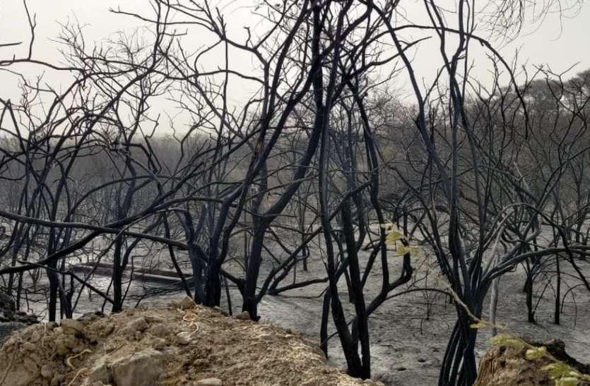 9 घंटों की मश्क्कत के बाद अवाय के पास वन पट्टी में लगी आग पर पाया काबू