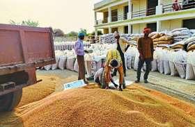 8 लाख क्विंटल अधिक हुई गेहूं की खरीद,्पिछले साल की तुलना में किसान भी पहुंचे अधिक