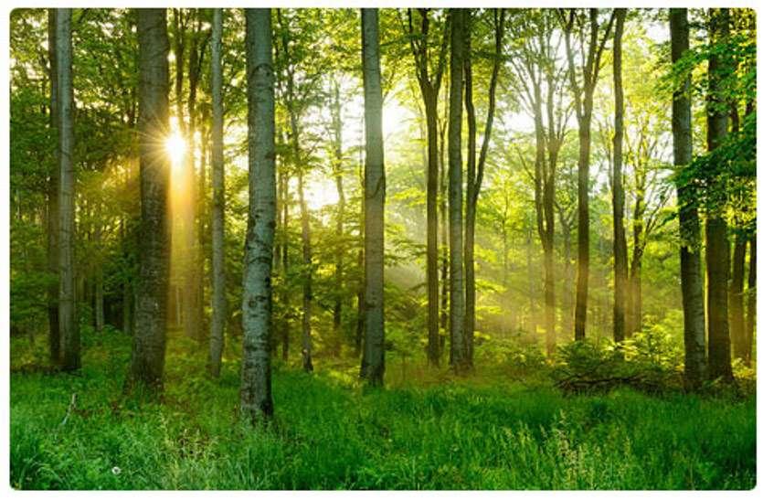 छत्तीसगढ़ में ग्राम सभाओं को मिलेगा सामुदायिक वन संसाधन अधिकार, वन विभाग होगा नोडल विभाग
