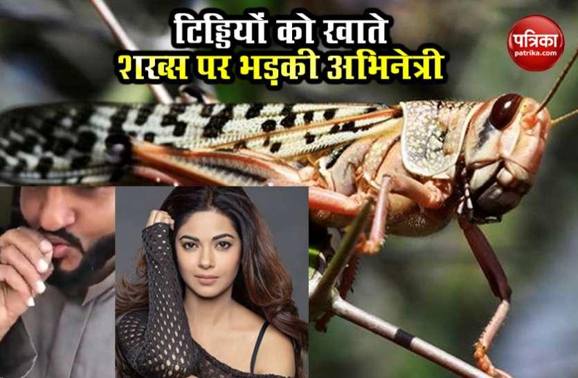 Priyanka Chopra की बहन ने शेयर की Video, टिड्डियों को खा रहा था शख्स कहा- 'नहीं सिखा कोरोनावायरस से'