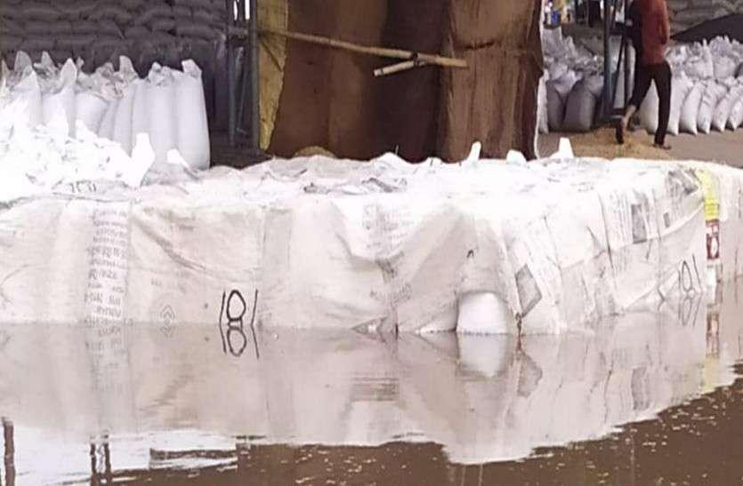 नई धानमंडी में एफसीआई का गेहूं भीगा, ढाई लाख थैले मंडी में पड़ा है गेहूं
