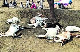 आकाशीय बिजली से बकरियों की मृत्यु पर पशु पालकों को दी गई आर्थिक मदद ...