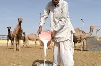 अभिभावकों ने बताई ऊंटनी के दूध की औषधीय महत्ता