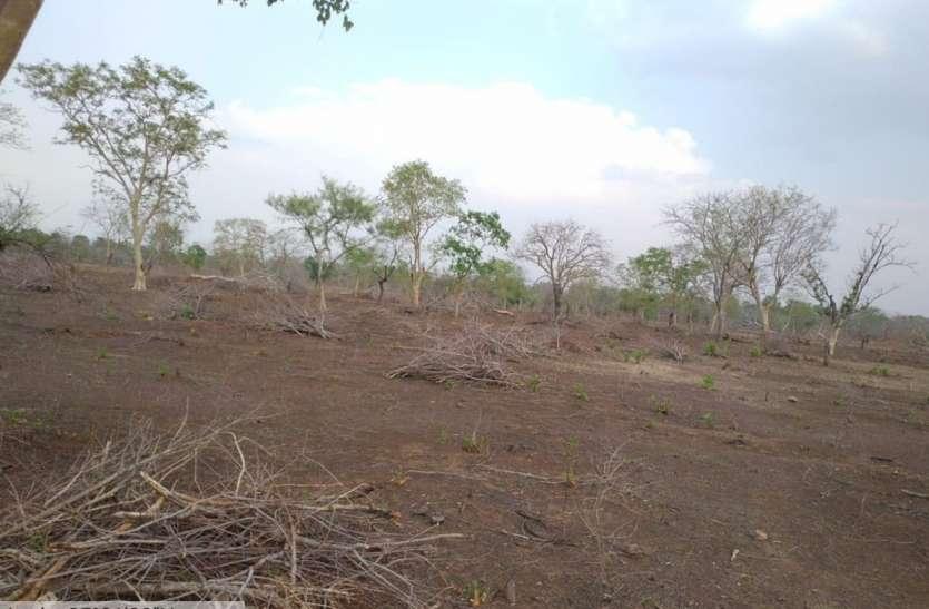 जंगल की दस हेक्टेयर जमीन पर चली भू-माफिया की कुल्हाड़ी
