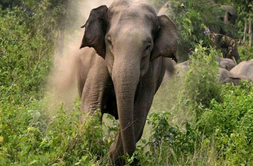 जंगली हाथी ने एक दृष्टिहीन गायक पर किया हमला, पटक-पटककर मार डाला