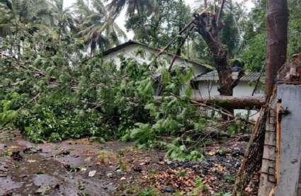 #NisargaCyclone: मुंबई, गुजरात पर चक्रवाती तूफान की दस्तक, मूसलाधार बारिश और तेज गति की आंधियों से पेड़ उखड़े