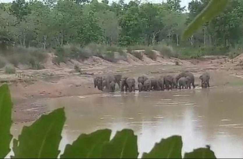 गांव के करीब पहुंचा 21 जंगली हाथियों का दल, हाथियों के कारण मशाल जलाकर कर रहे रतजगा