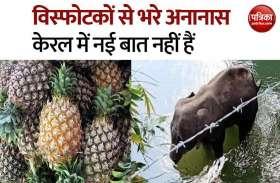 Kerala में विस्फोटक अनानास से आए दिन होती है जानवरों की मौत, जानें लोग क्यों करते हैं ऐसा?