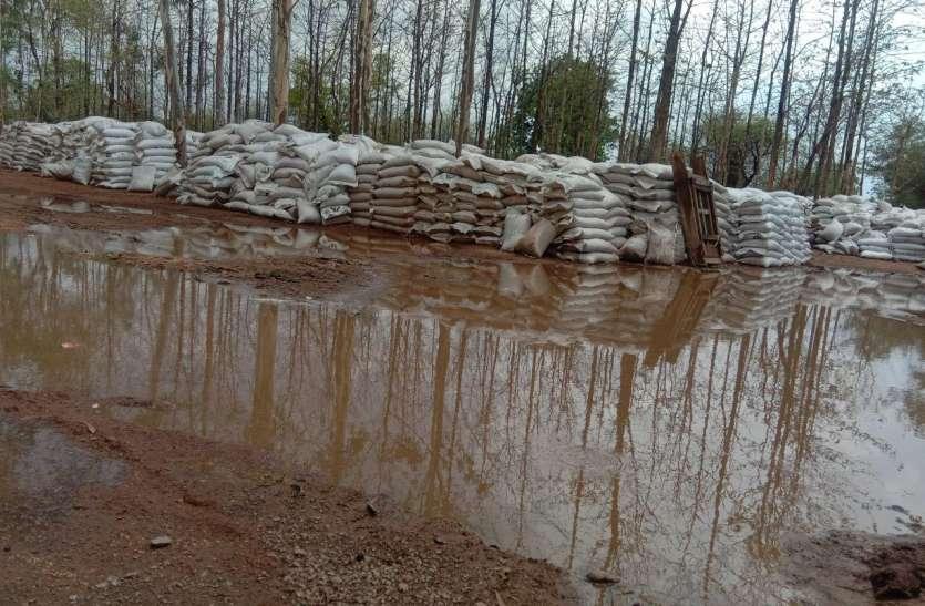 अफसरों की गंभीर बेपरवाही: हजारों क्विंटल गेहूं बारिश में भीगकर हुआ खराब, सरकार को करोड़ों की चपत, देखें वीडियो