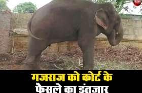 इंसान की हत्या पर हाथी को जेल, 10 महीने से जंजीरों में बंधा काटा रहा सजा